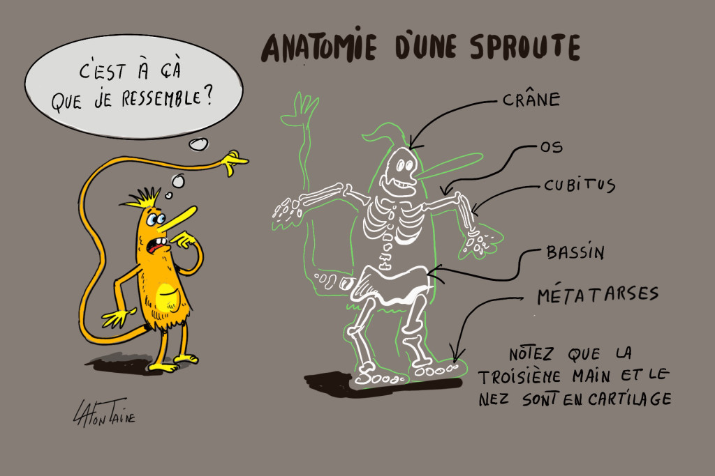 anatomie Sproute